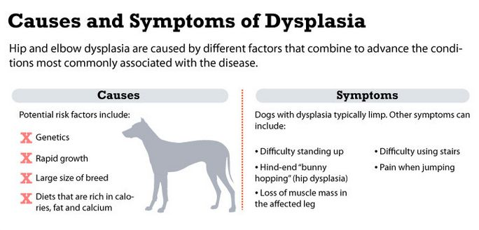 causes and symptoms of dysplasia